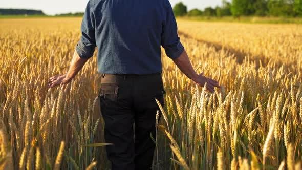 Landwirt in landwirtschaftlichen Flächen