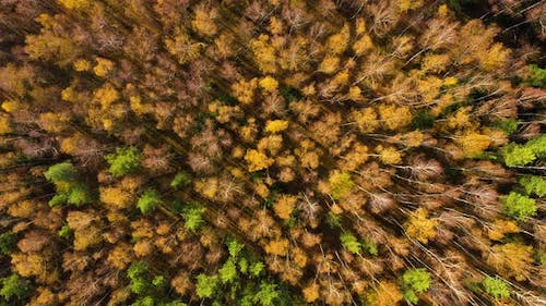 Deciduous Forest Top View