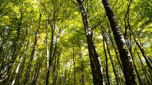 Autumn Forest 2