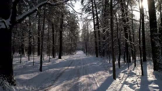 Thumbnail for The Road in Winter Forest