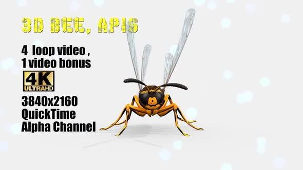 Thumbnail for 3d Bee Apis