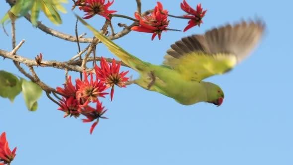 Un perroquet vert au Ralenti