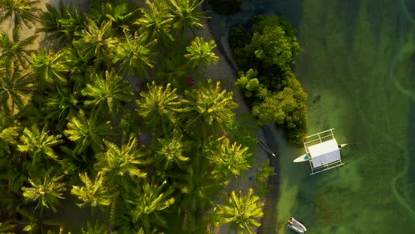 Cover Image for Happy Couple Sitting on the Sunny Beach Among Palm Trees View From Above Aerial