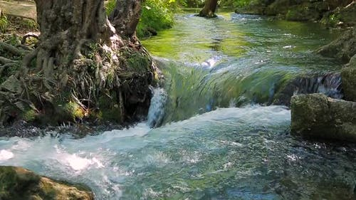 Small Waterfall Washes the Roots of a Tree