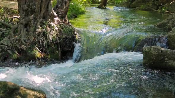 Thumbnail for Small Waterfall Washes the Roots of a Tree