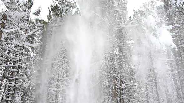 Thumbnail for Snow Falls From The Tree Tops