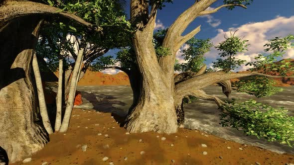 Thumbnail for Big tree by the beach
