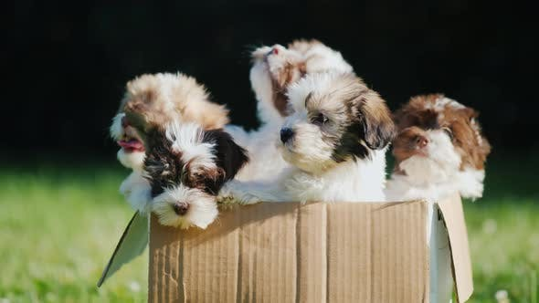 Thumbnail for Box with Cute Little Puppies