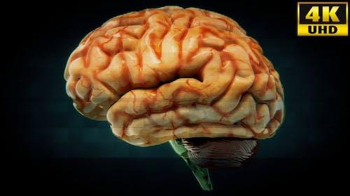 Brain Medicine Background Loops Pack V1