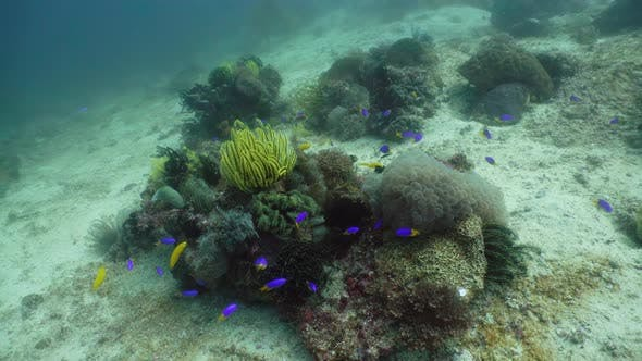 Thumbnail for The Underwater World of a Coral Reef