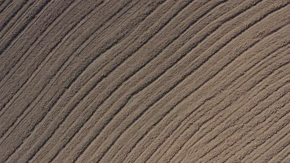 Thumbnail for Parallel furrows in the fertil soil 4K aerial video