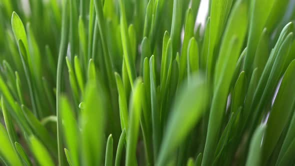 Thumbnail for Rotation Field Grass Background