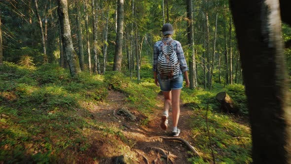 Cover Image for Woman Tourist with a Backpack Goes Along the Forest Path