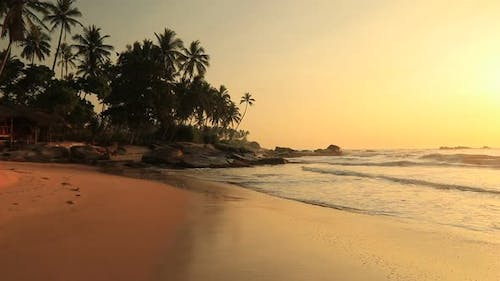Sandy Beach with Palm Trees at Sunset