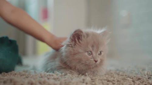 Kleines Mädchen Kind Spielen Mit Fluffy Kätzchen Zu Hause In Zimmer