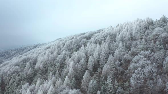 Cover Image for Winter Wonderland