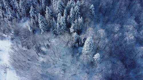 Snowy Forest From Above