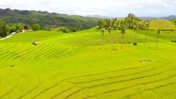 Beautiful Rice Terraces. Bohol, Philippines.