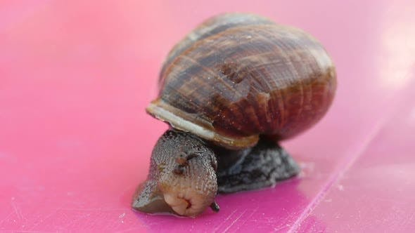 Thumbnail for Snail On The Table, Snail Crawling The Table