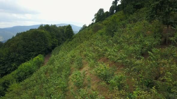 Thumbnail for Cultivated Area Like Nut Fields on Ordu Hills, Turkey