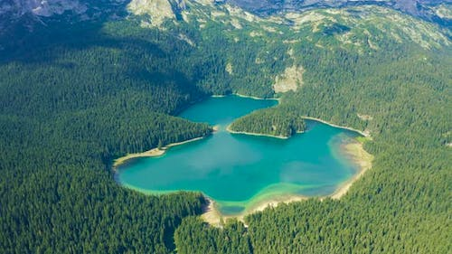Fly Over Black Lake with Pine Forest on Mountains in National Park Durmitor Montenegro