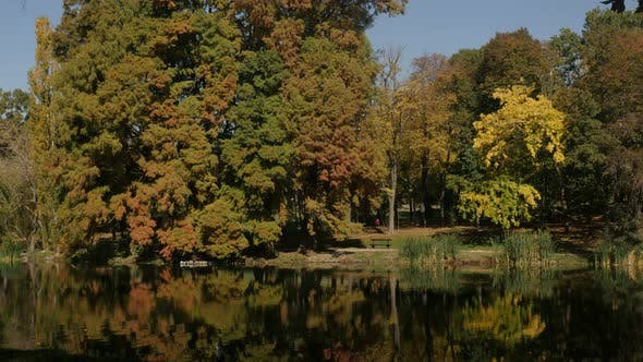 Thumbnail for Reflections on pond water and color of trees in the park 3840X2160 UltraHD  footage - Relaxing morni