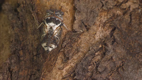 Thumbnail for Eukaryota Animalia Arthropoda Tracheata Hexapoda Insecta Insecta Biology