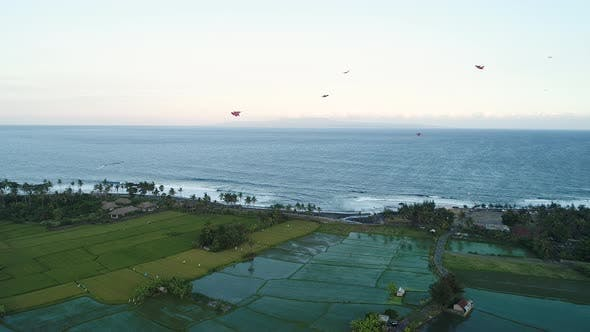 Thumbnail for Kites Fly on the Ocean Shore Near the Rice Terraces in the Evening
