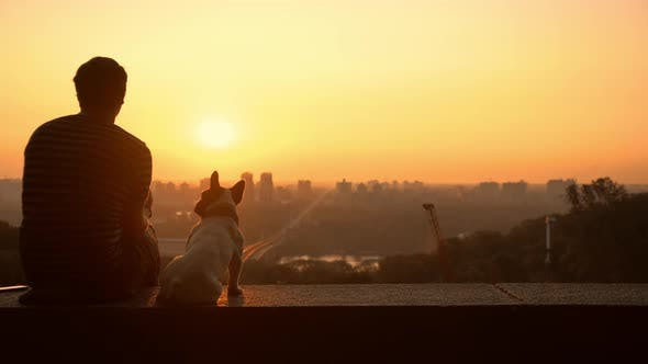 Cover Image for A Man Caresses His Dog While Enjoying the View