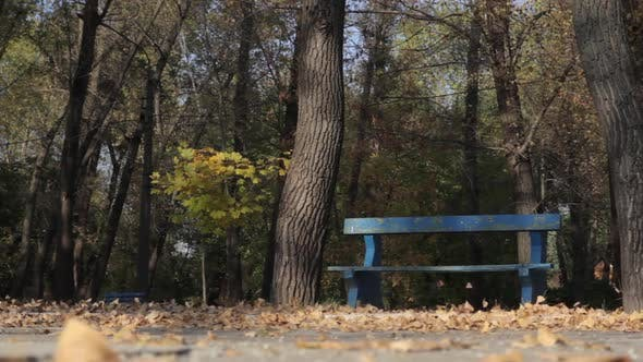 Thumbnail for Fallen Autumn Leaves in the Park