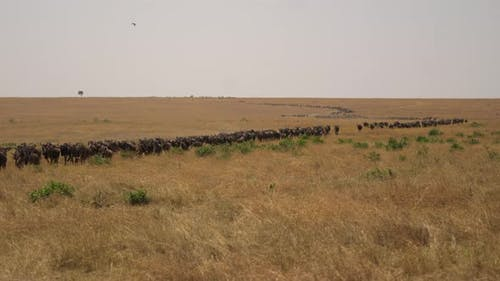 Gnus during migration