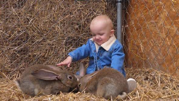Thumbnail for Happy Baby in Denim Jacket Playing with Three Rabbits While They're Eating. Children and Animals