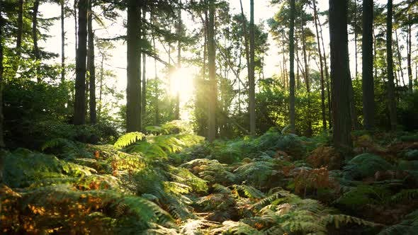Thumbnail for Sunlight through a forest in summer