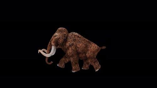 Mammoth Run