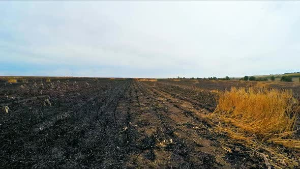 Thumbnail for The Camera Moves on the Burnt Field