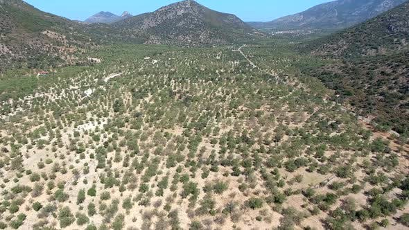 Thumbnail for Sparse Orchard in Arid Hot Mediterranean Climate