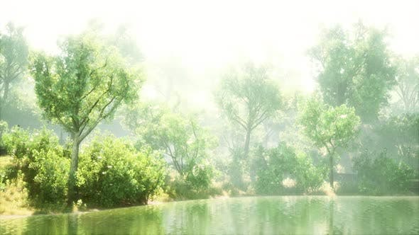 Thumbnail for Tranquil Pond Framed By Lush Green Woodland Park in Sunshine