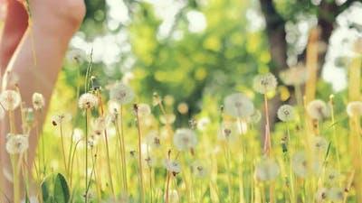 Woman Walks Across a Dandelion Lawn