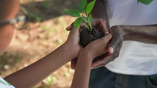 Saving Nature Young African Female Volunteer Gives a Plant to a Man a Closeup on Her Hands a