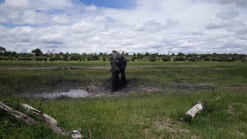 Elephant at A Waterpool at Moremi Game Reserve