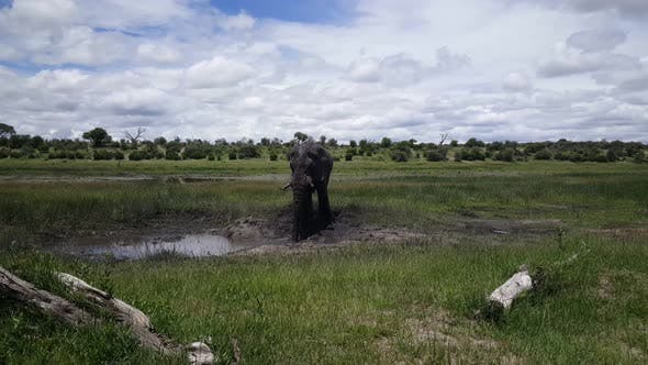 Thumbnail for Elephant at A Waterpool at Moremi Game Reserve
