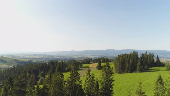 Thumbnail for Flying Over the Forest Trees Landscape Panorama