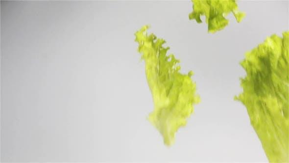Thumbnail for Wet Lettuce Leaves Falling Isolated White Background