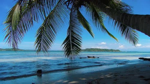 Idyllic Caribbean White Virgin Beach with Palm Trees on the Water