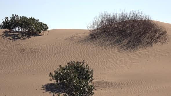 Thumbnail for Real Color Desert