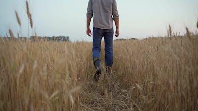 Man Walking Through a Wheat Field