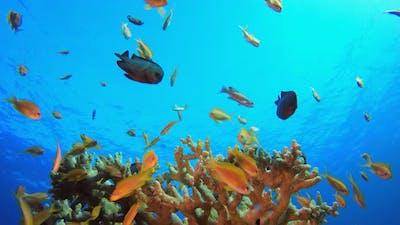 Fish Blue Sea Water