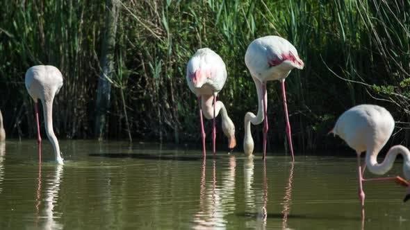Flamingo bird nature wilflife reserve carmargue lagoon