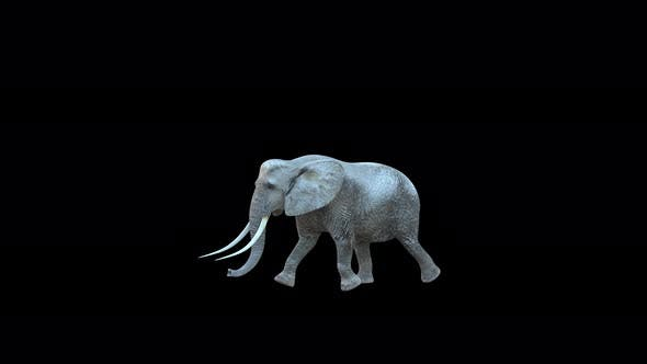 4K Elephant Walk