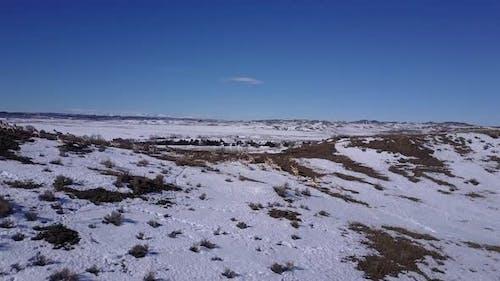 Pronghorn Antelope Herd Many Alarmed Spooked Frightened Running Fleeing in Winter Ridgeline